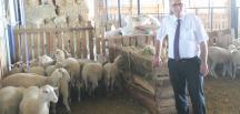 Bursa'da özel bir koyun ırkı geliştiriliyor