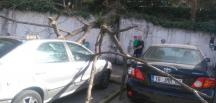 Lodostan devrilen ağaç park halindeki 5 aracın üzerine düştü…