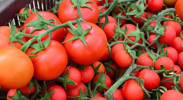 Ekonomi kurmaylarının domates kararı: Ahmet yiyemiyorsa İvan'a da yok!