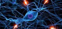 Oruç Tutmak, Kök Hücreleri Yeniliyor